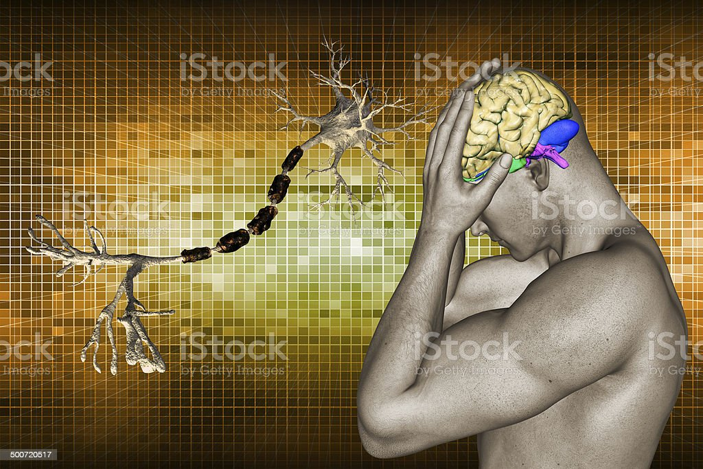 human brain and neuron stock photo