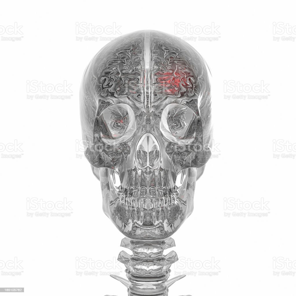 Human Brain and skeleton glas style stock photo