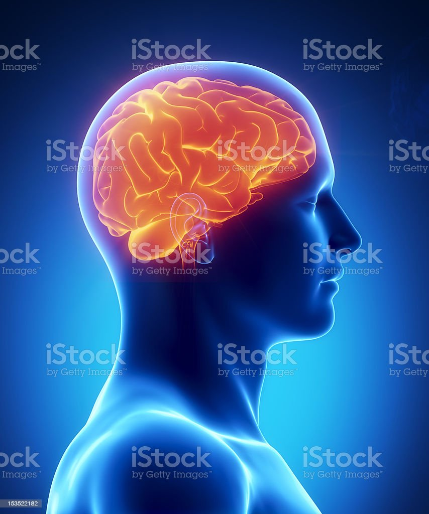 Human brain glowing lateral view stock photo