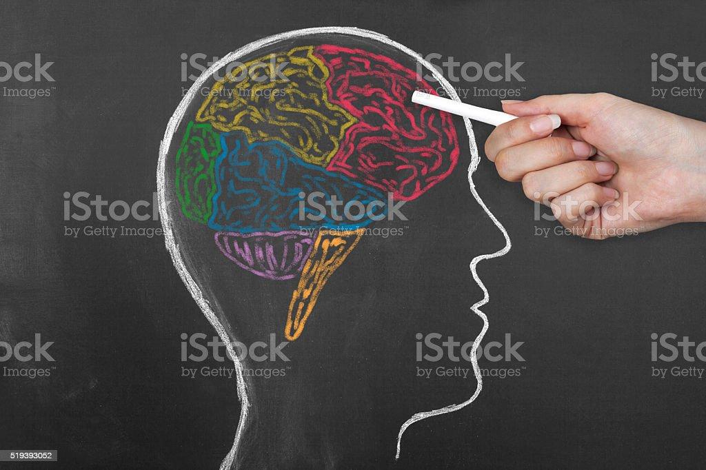 Human Brain Lobes on Blackboard. stock photo