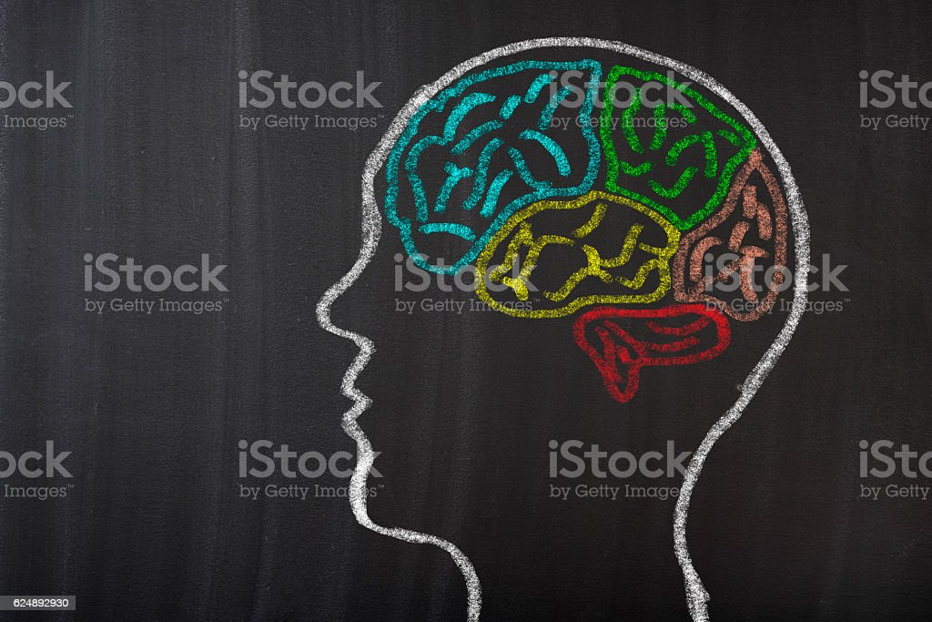 Human Brain Lobes on Blackboard stock photo