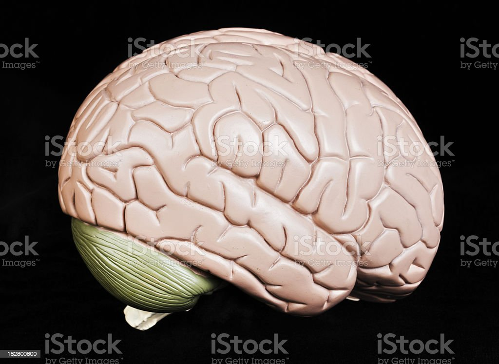 Human brain model seen from side against black background stock photo