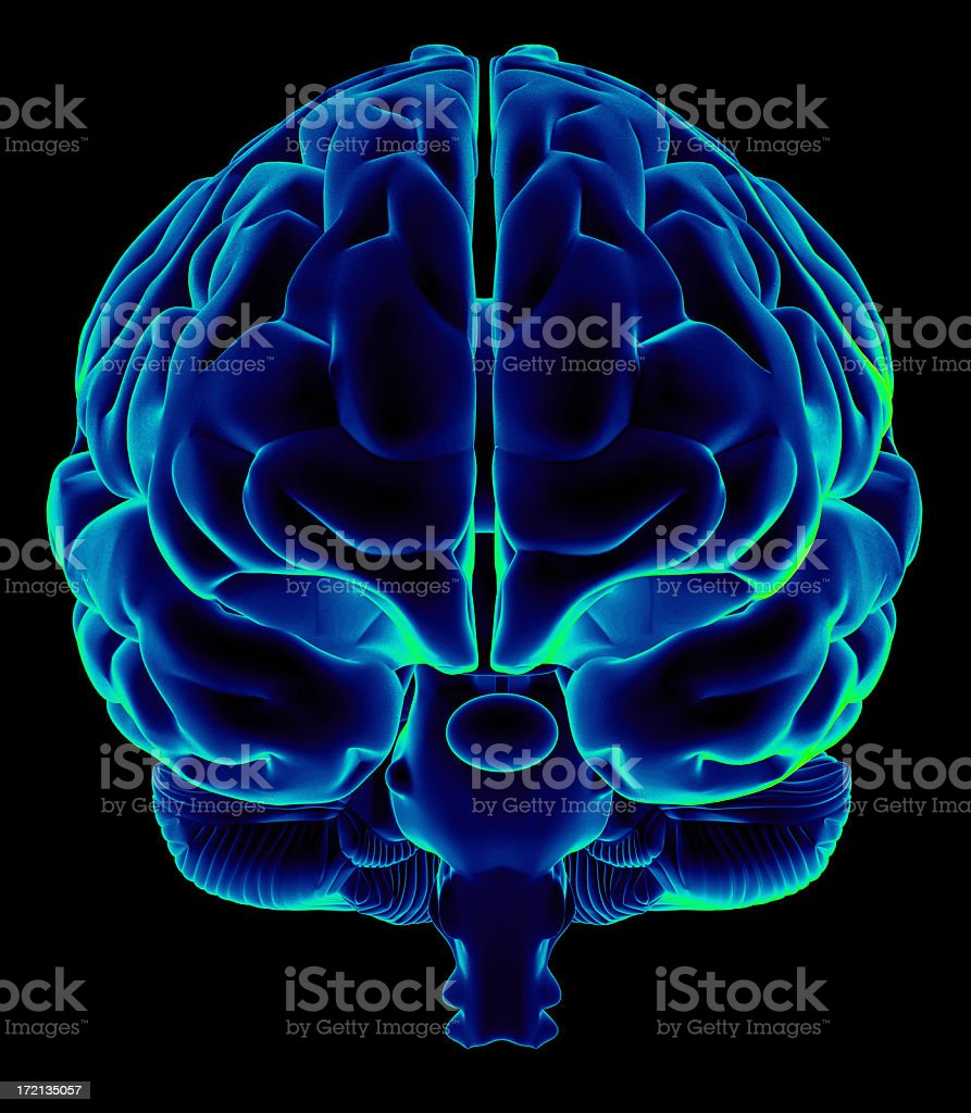 Human brain on front view stock photo