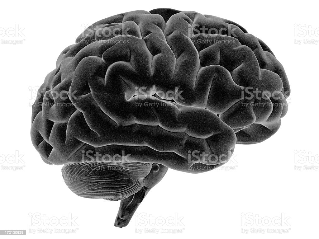 Human brain on side view royalty-free stock photo