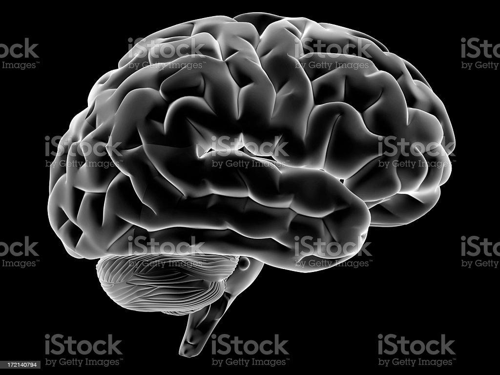 Human brain on side view stock photo