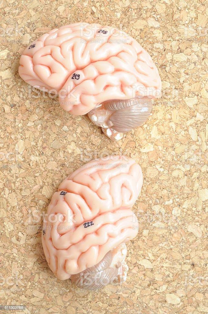 human brain on wooden background stock photo