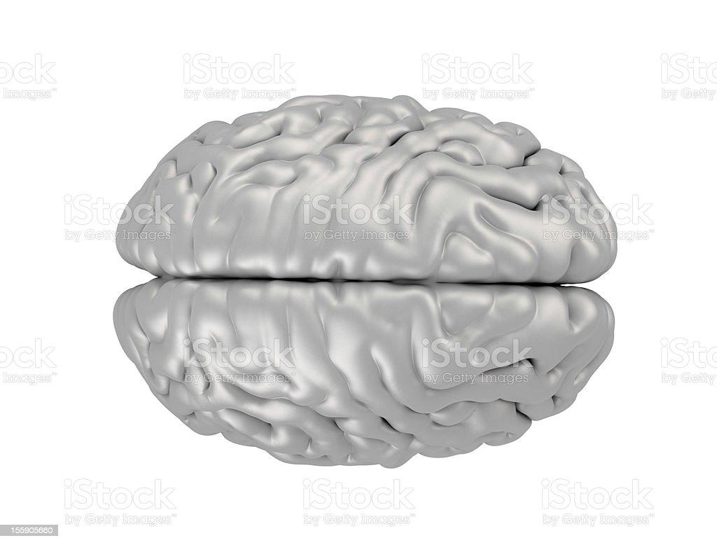 Human Brain top view royalty-free stock photo