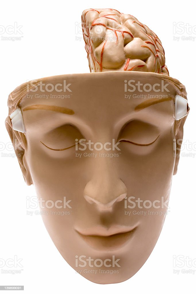 Human Brain w/ Path (Front View) royalty-free stock photo