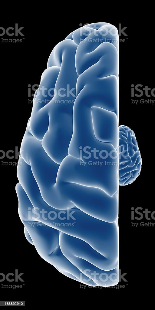 Human brain with the right side smaller on top view stock photo