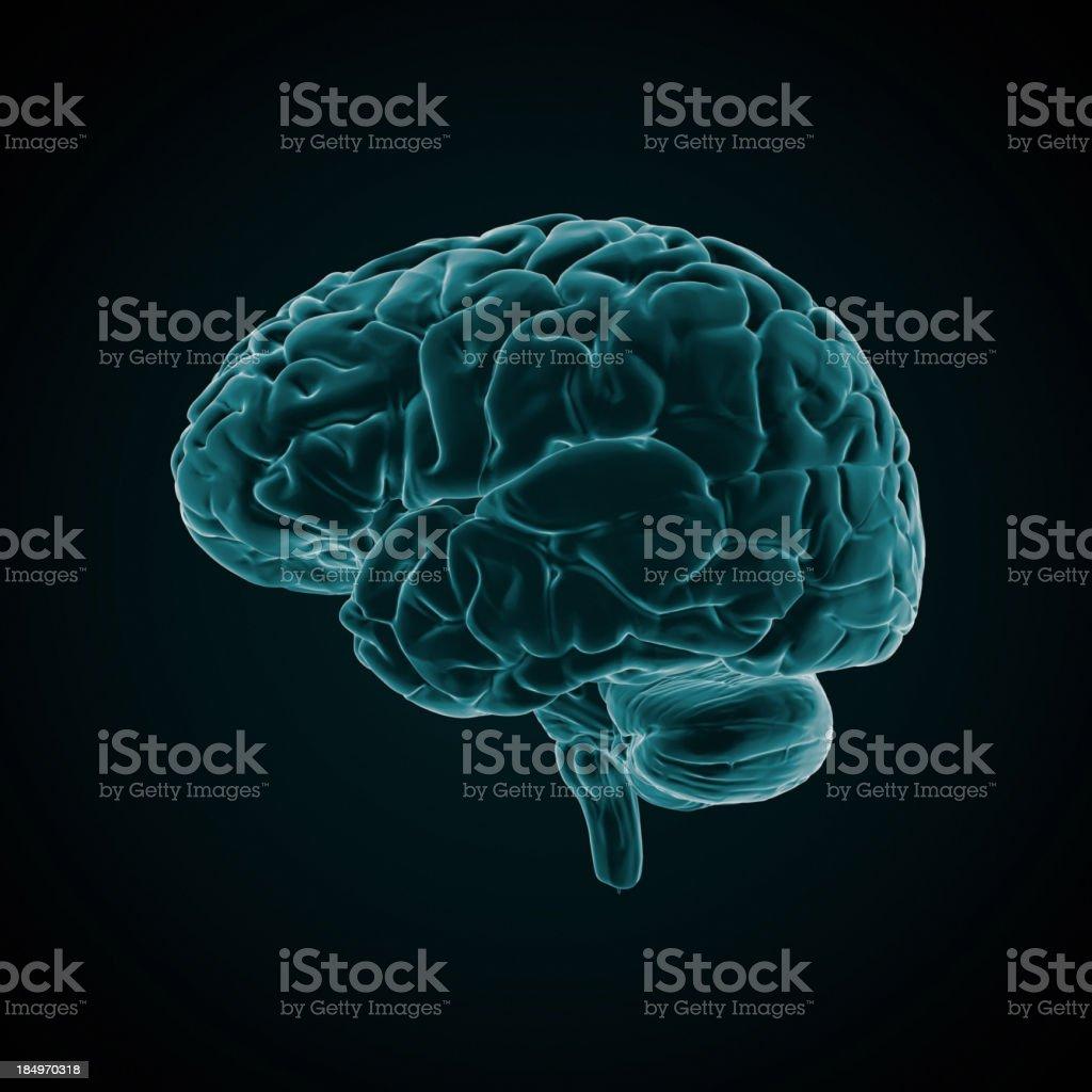 Human Brain X-ray style royalty-free stock photo