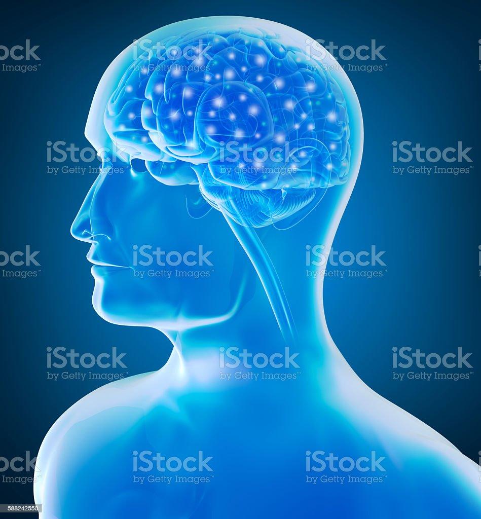 Human brain x-ray view 3D rendering stock photo