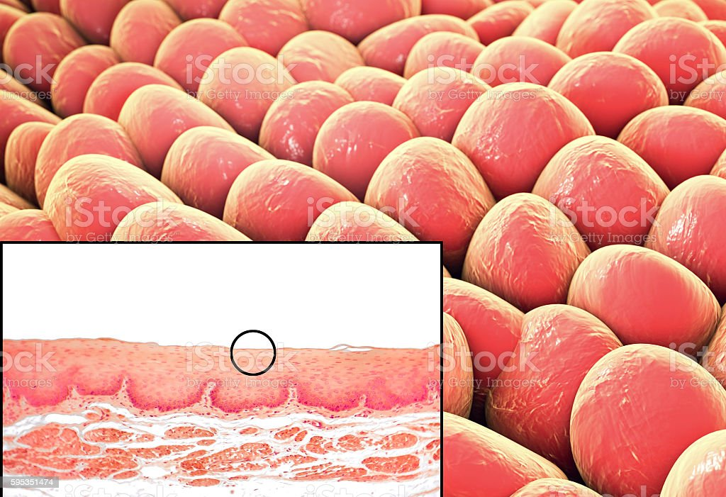 Human cells, micrograph and 3D illustration stock photo