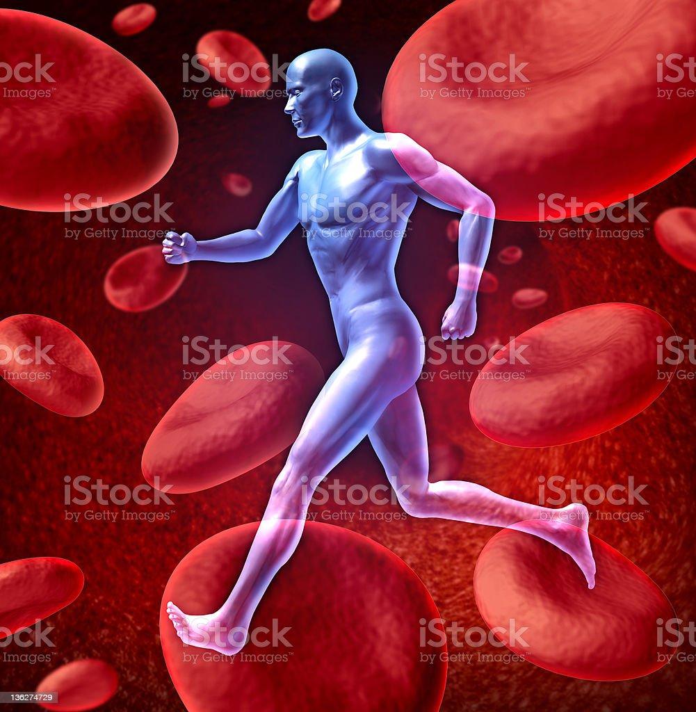 Human circulatory blood system royalty-free stock photo