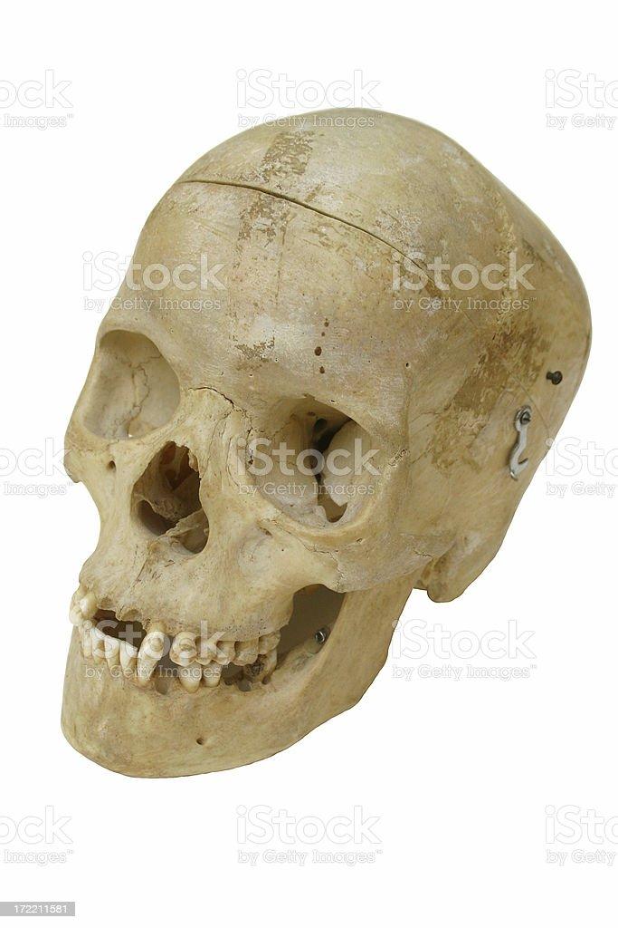 Human Cranium stock photo