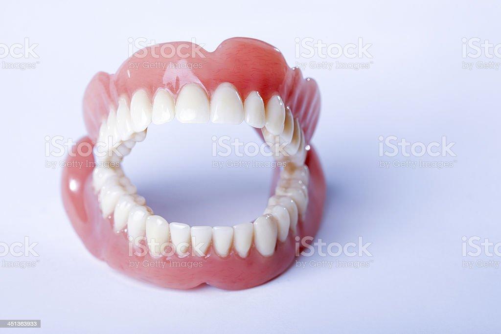 Human Dentures stock photo