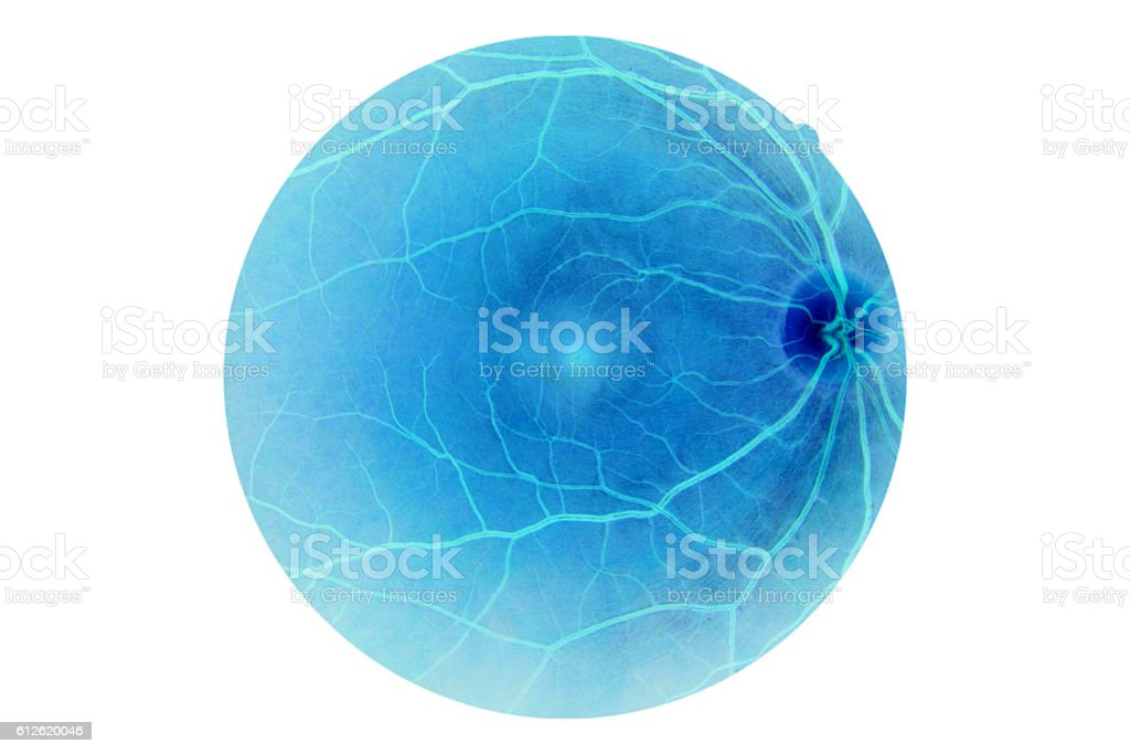 Human eye anatomy, retina, optic disc artery and vein etc. stock photo