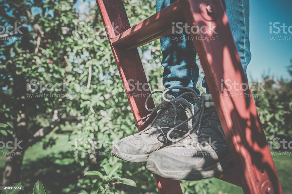 Human Feet in Red Wooden Ladder in Orchard stock photo
