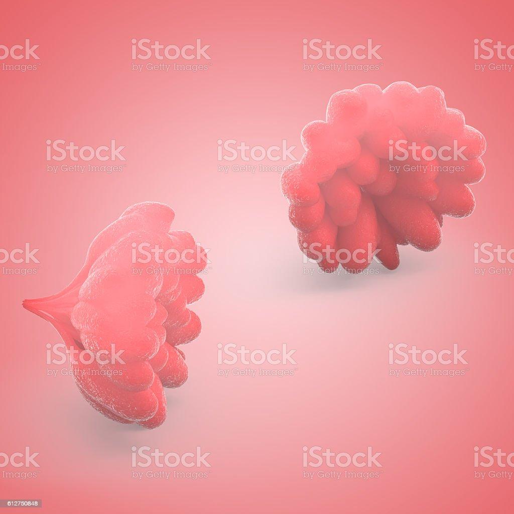 Human Female Body Organs (Mammary Glands) stock photo