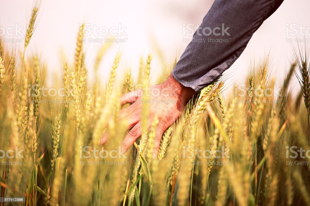 Human Hand And Sunny Day stock photo