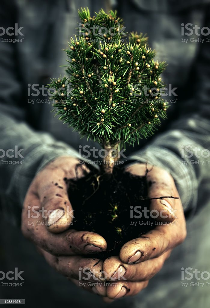 Human Hand and tree royalty-free stock photo