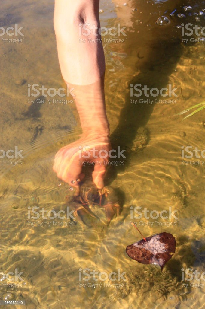human hand catches the cancer in the river water stock photo
