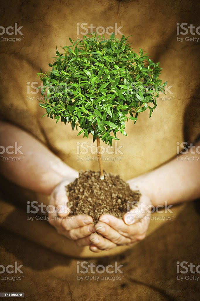 Human Hand holding a Tree royalty-free stock photo