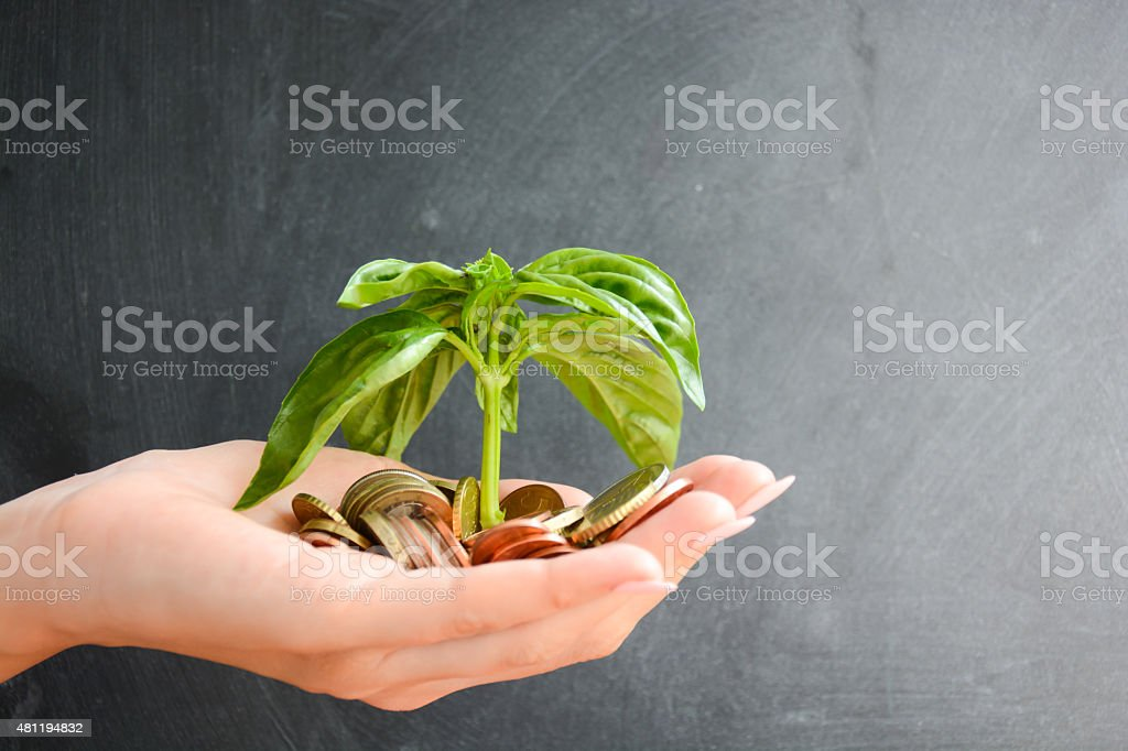 Human hand holding coins and a growing plant stock photo