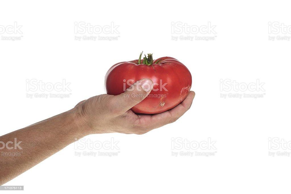 Human hand holding huge tomato stock photo