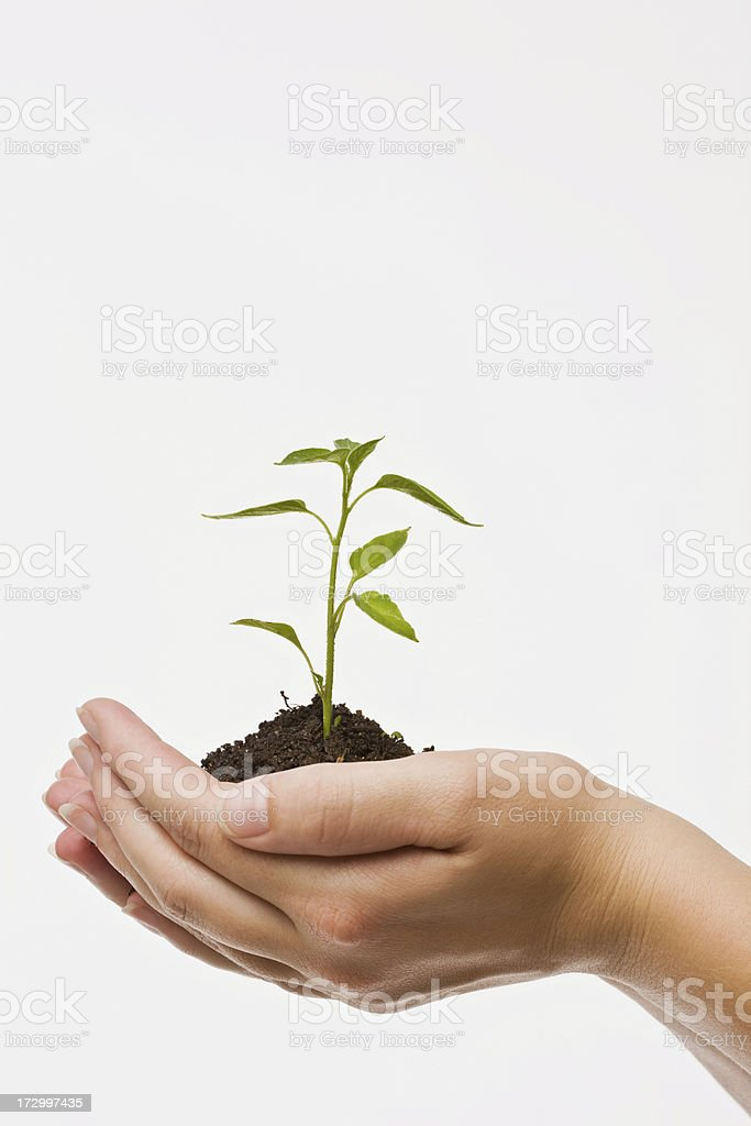 Human hand holding plant royalty-free stock photo