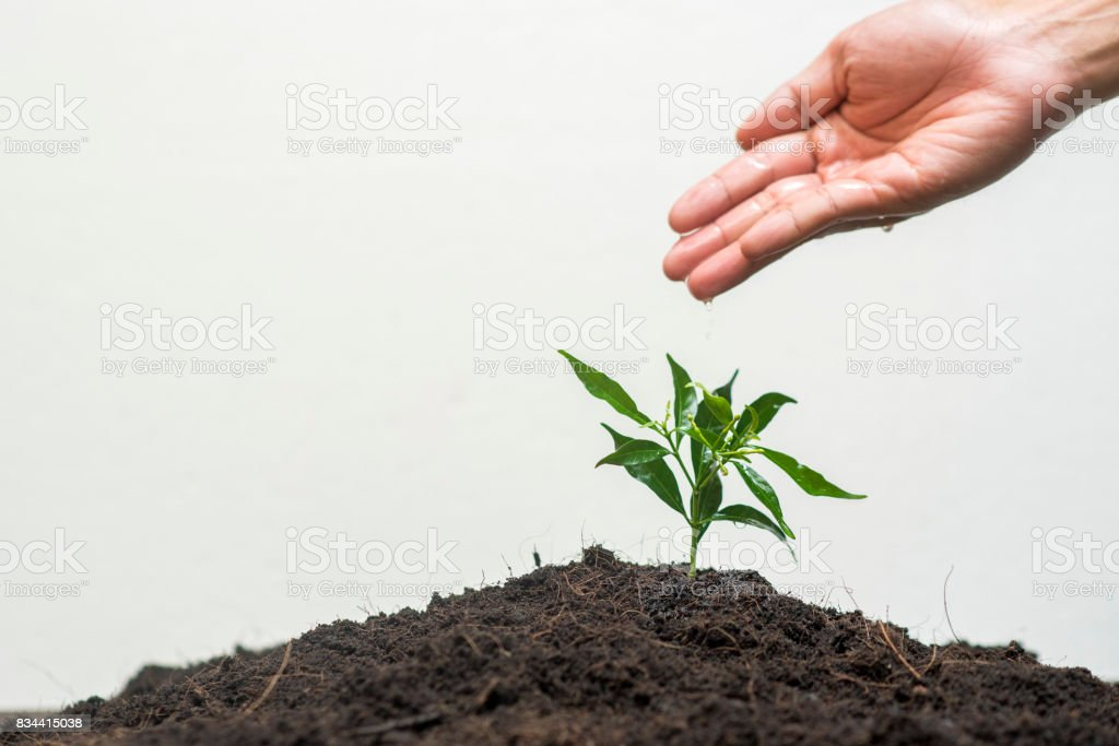 Human hand planting a tree on white background, Save earth concept stock photo