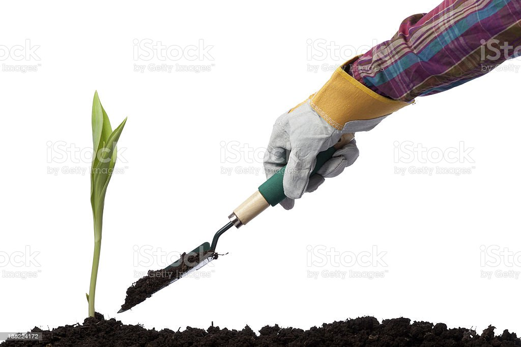 Human hand planting on white background stock photo