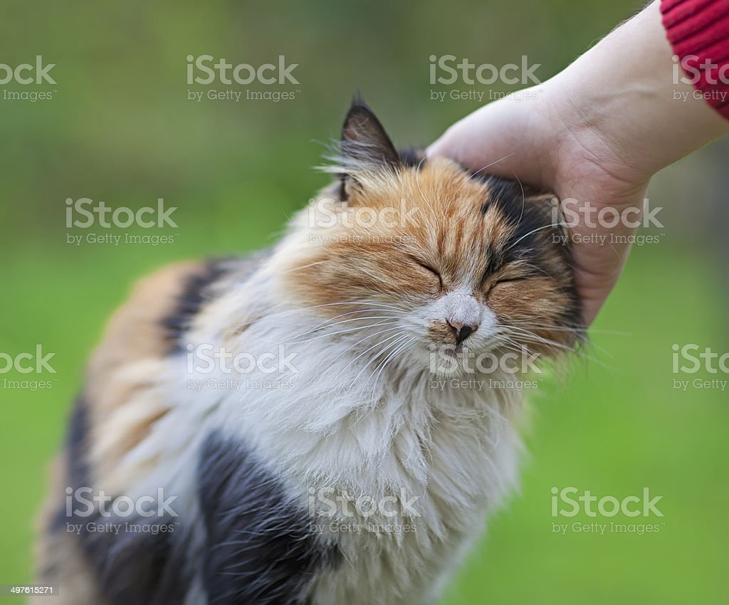 Human hand scratching a cat with love stock photo
