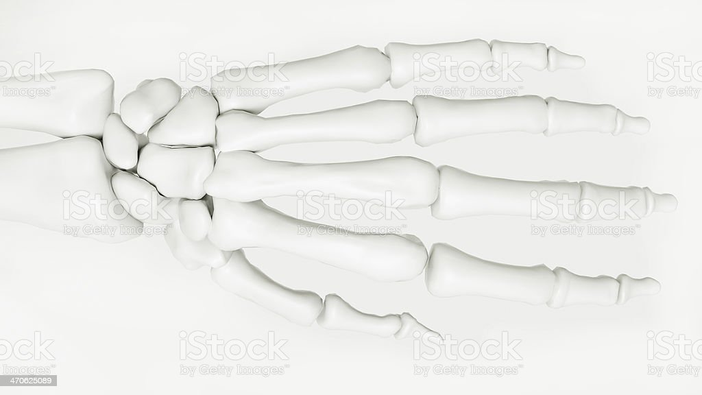 Human Hand Skeleton stock photo