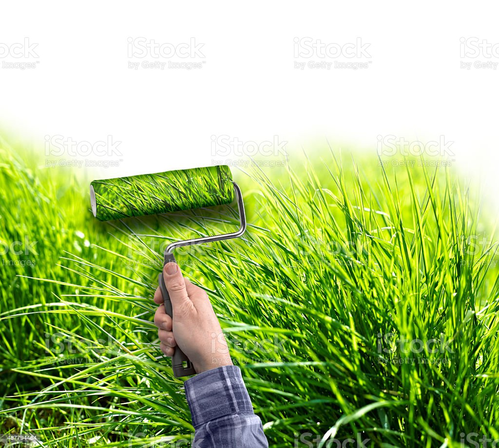 human hand with roller painting true grass on white wall stock photo