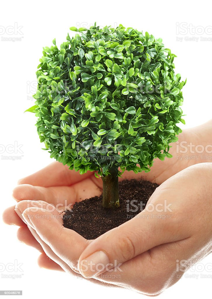 Human hands and tree royalty-free stock photo