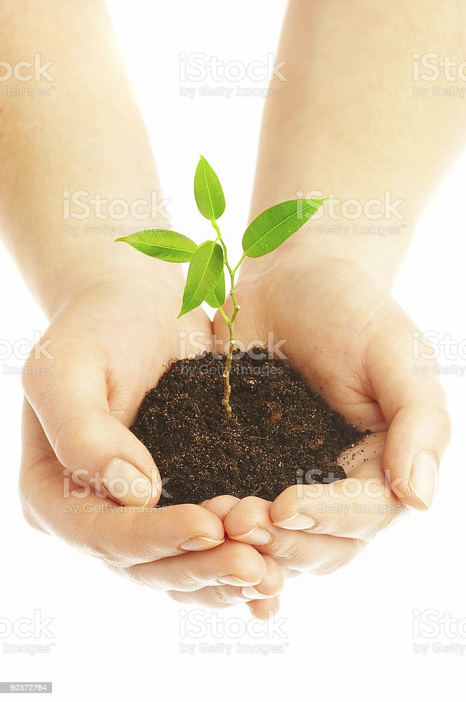 Human hands cradling a young plant royalty-free stock photo