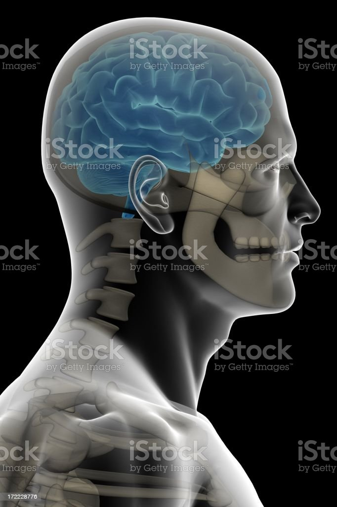 \'X-ray of a human head with brain and bones on side view, isolated on...