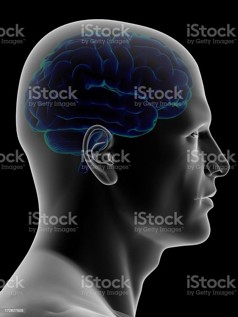Human head with the brain inside stock photo