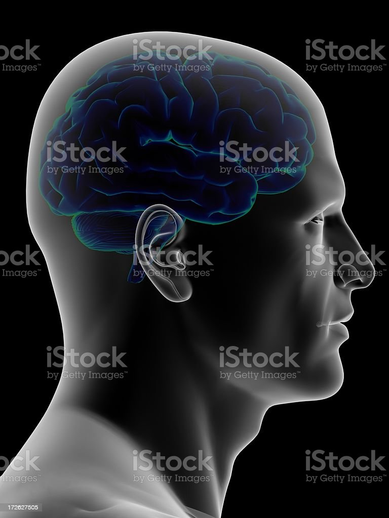 Human head with the brain inside stock photo
