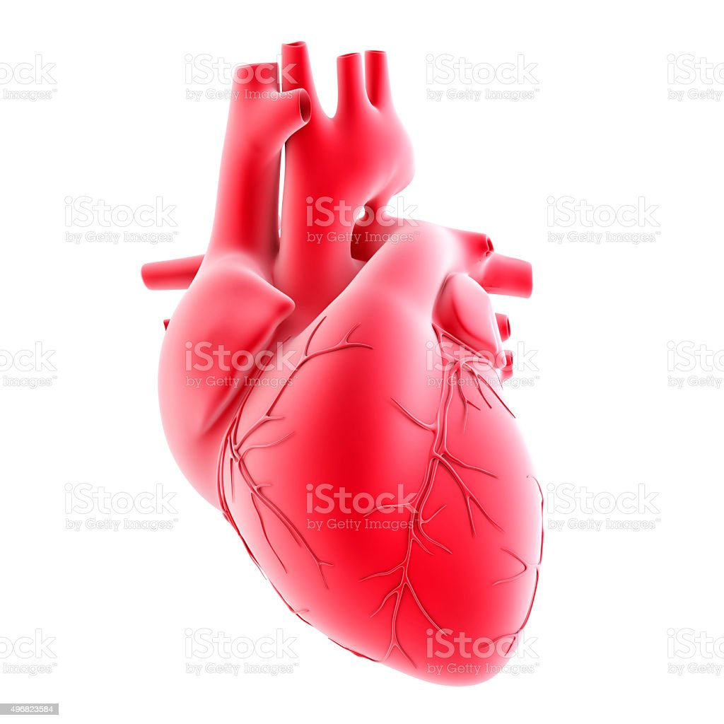 Human heart. 3d illustration. Isolated, contains clipping path stock photo