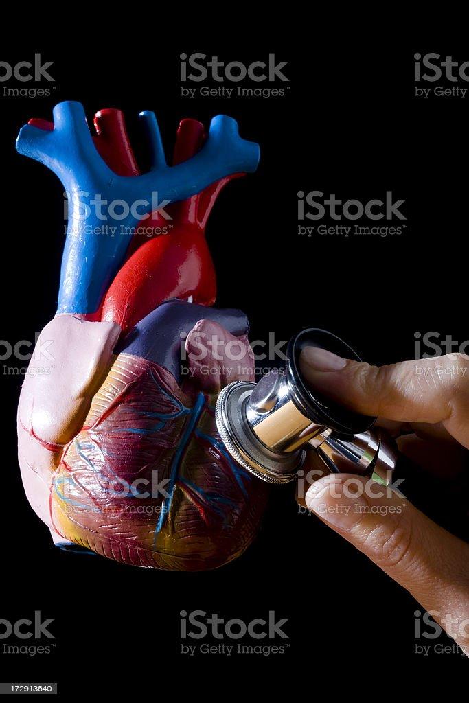 Human heart and stethoscope stock photo