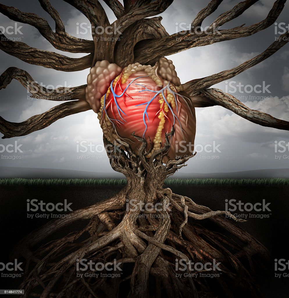 Human Heart Health Concept stock photo