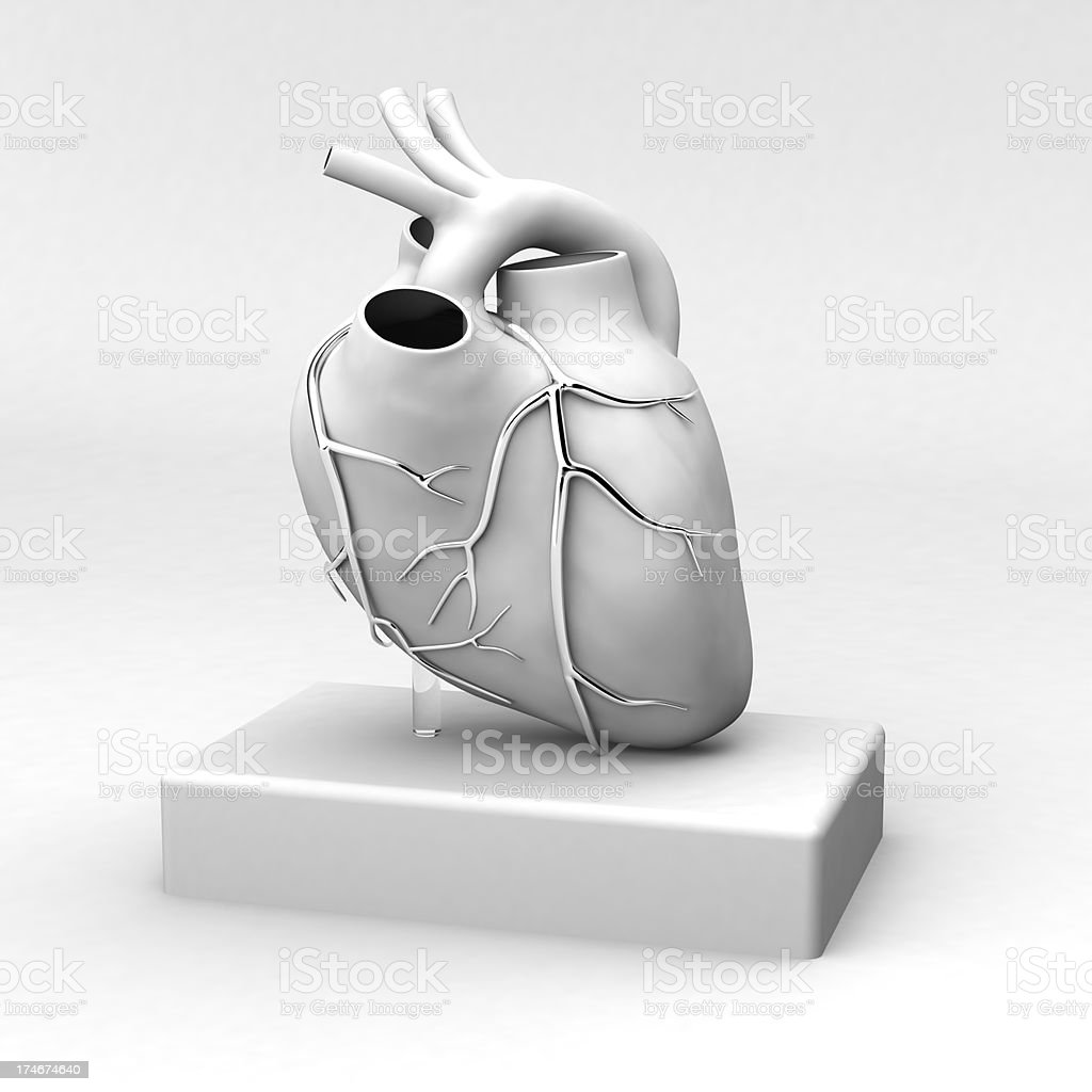 Human Heart royalty-free stock photo