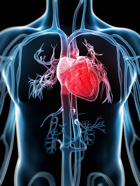 The Human Heart Defenderautofo