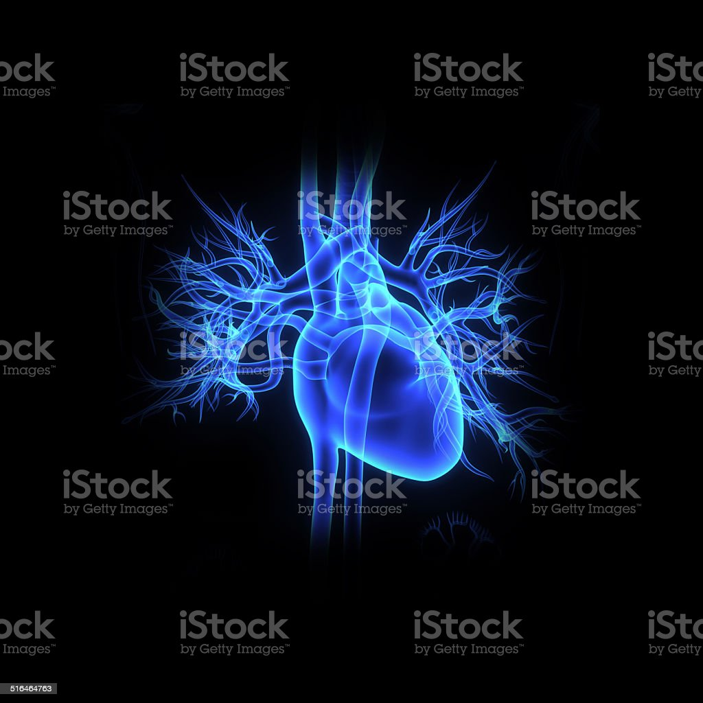 Human heart vector art illustration
