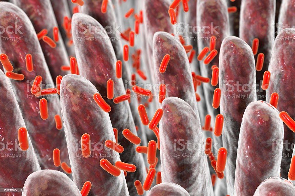 Human intestine with intestinal bacteria stock photo