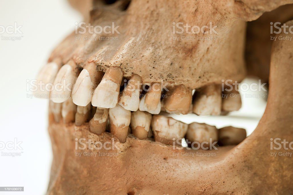 Human jaws stock photo