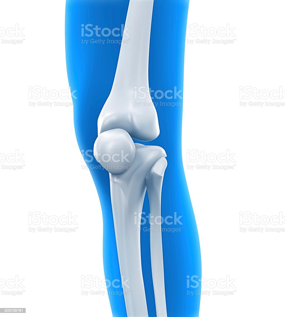 Human Knee Anatomy stock photo