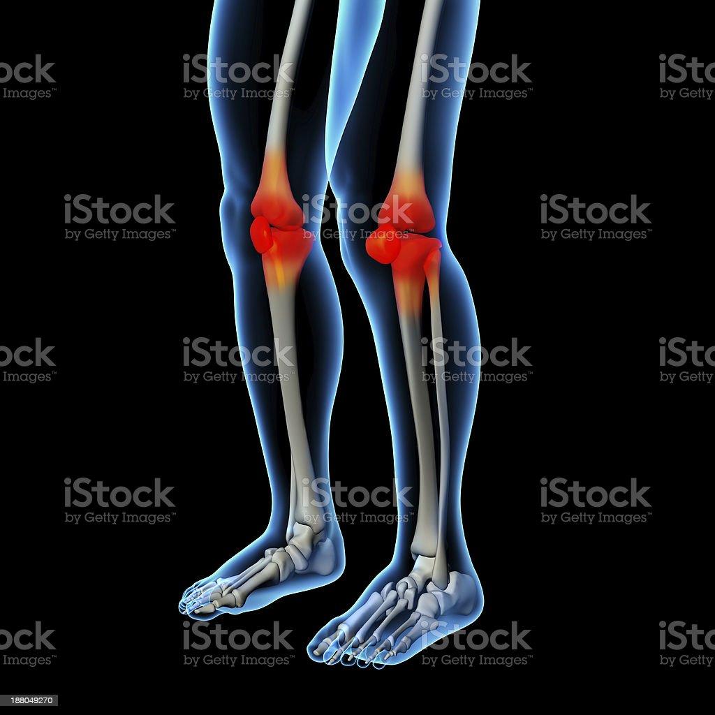 Human knee pain with the anatomy of a skeleton leg stock photo