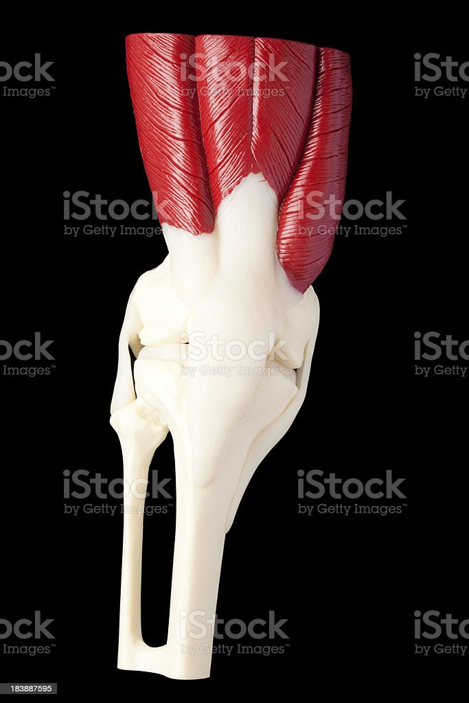 Human knee stock photo